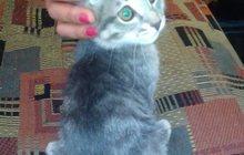 Котенок ласковый, игривый и очень умный