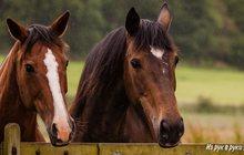 Лошади и бараны