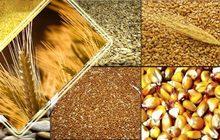 Переработка масленичных и зерновых культур