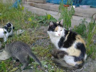 Скачать бесплатно фотографию Отдам даром - приму в дар Ищу дом для красавицы кошки 39578069 в Новосибирске