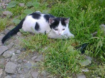 Новое изображение Отдам даром - приму в дар Ищу дом для красавицы кошки 39578069 в Новосибирске