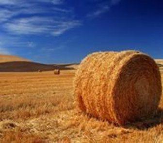 Фотография в Домашние животные Корм для животных Продам сено в тюках. НЕ дорого. От производителя. в Новосибирске 860