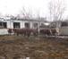 Изображение в   Продам баранов курдючные.   Продаю быков в Новосибирске 0
