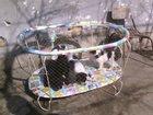 Фото в Собаки и щенки Продажа собак, щенков отдам в хорошие руки щенков русского спанеля в Одессе 0