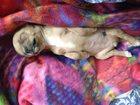 Фото в Собаки и щенки Продажа собак, щенков ❗️SOS&#1007 1;️Помогите! в Одинцово 0