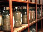 Изображение в Домашние животные Растения Продаем семена сосны обыкновенной 1 класса в Омске 6500