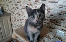 Красивый котенок в добрые руки, девочка 6 месяцев
