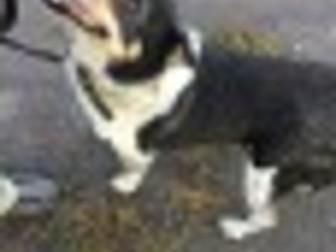 Новое foto Продажа собак, щенков Пристраивается СОБАКА 37329666 в Омске