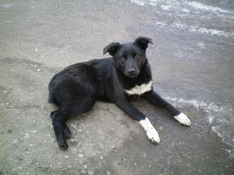 Увидеть foto Отдам даром - приму в дар Охранная собака 38684209 в Омске
