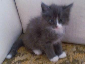 Скачать бесплатно foto Отдам даром - приму в дар котята 38847547 в Омске