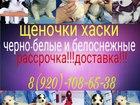 Фотки и картинки Сибирский хаски смотреть в Оренбурге