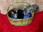 Просмотреть foto Отдам даром - приму в дар Котята в добрые руки 38426630 в Оренбурге