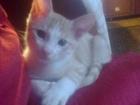 Просмотреть foto Отдам даром - приму в дар Веселые котята 38433944 в Оренбурге