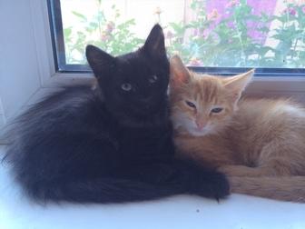Увидеть foto Продажа кошек и котят 2 симпатяги-КОТИКИ (мальчики) ищут добрых хозяев 37039597 в Оренбурге