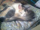 Фото в Отдам даром - Приму в дар Отдам даром отдам в добрые руки кошку (возраст 2г) в в Пензе 0