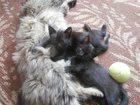 Изображение в  Отдам даром - приму в дар Отдам в дар двух очаровательных чёрных котят в Пензе 0