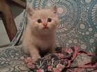 Фотография в Кошки и котята Продажа кошек и котят Отдам котят в добрые и хорошие руки , от в Пензе 50