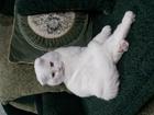 Фото в   Пушистый котик без вредных привычек приглашает в Пензе 1000