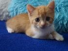 Свежее фото Отдам даром - приму в дар Отдам котеночка 39592347 в Пензе