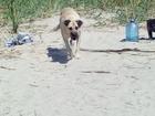 Скачать бесплатно изображение Отдам даром - приму в дар приму в дар собаку в пензе щенка или молодого кобепя, 51481894 в Пензе