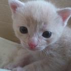 Котята рожденные 12 июня 2018 года