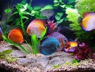 Обслуживание аквариумов В состав сервисного обслуживания входит:    Регулярное п