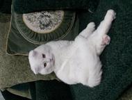 Очаровательный блондин Пушистый котик без вредных привычек приглашает кошечек на
