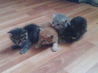 Скачать бесплатно фото Отдам даром - приму в дар Отдам котят 32967536 в Перми