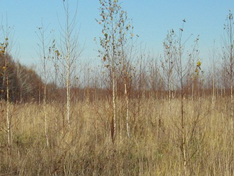 Уникальное фотографию  Продам землю 36га 38258862 в Перми