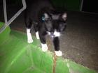 Смотреть фото Находки Найден котенок в районе Трубников, 48а 71465094 в Первоуральске
