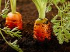 Свежее foto  Земля плодородная, грунт садовый, торф, чернозем навалом с доставкой 38895940 в Питере