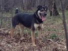 Уникальное изображение Потерянные Пропала собака, Подольск, Щербинка, Климовск, Бутово 39835329 в Подольске