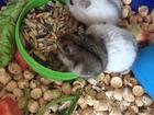 Уникальное foto Услуги для животных Древесный наполнитель для животных и грызунов 74312801 в Подольске