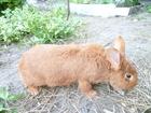 Скачать фото  кролики 39535912 в Прохладном