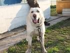 Фотография в Собаки и щенки Вязка собак Красивый, воспитанный, привитый по возрасту, в Прокопьевске 0