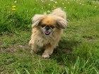 Увидеть фотографию Находки Потерялась собака 38718640 в Прокопьевске