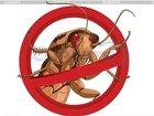 Фотография в Услуги компаний и частных лиц Разные услуги Клопы тараканы грызуны  научный прогресс в Пушкино 777