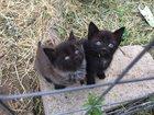 Скачать изображение Отдам даром Отдам милых, забавных, ласковых котят в хорошие руки! 34010106 в Раменском