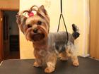 Скачать бесплатно фото Услуги для животных Стрижка собак и кошек в Раменском 41624720 в Раменском
