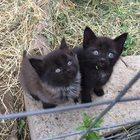 Отдам милых, забавных, ласковых котят в хорошие руки
