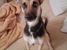 Фото в Потерянные и Найденные Потерянные Пропала собака сегодня часов в 6 вечера. в Рязани 0
