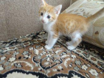 Увидеть фотографию Отдам даром Отдам замечательного рыжего котенка 33469515 в Рязани