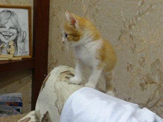Смотреть изображение Отдам даром Отдам замечательного рыжего котенка 33469515 в Рязани