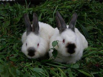 Увидеть foto  Калифарнийские кролики 34290784 в Рязани