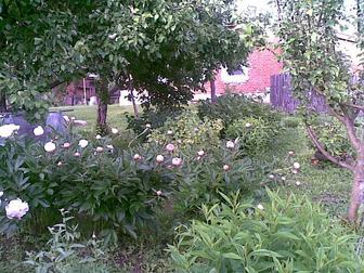 Просмотреть фотографию Дома Продается дом в Рязанской области,Спасского района,село Исады 69781263 в Рязани