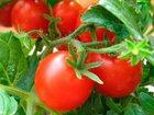Фото в   Предлагаю семена томатов различных сортов. в Ростове-на-Дону 3