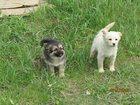Изображение в Собаки и щенки Продажа собак, щенков Злые безответственные люди выбросили в лесополосу в Ростове-на-Дону 0