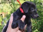 Изображение в Собаки и щенки Продажа собак, щенков отдам в добрые ответственные руки минеатюрную в Ростове-на-Дону 1