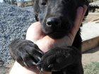Скачать фото  Приют для собак в городе Новочеркасск 33260625 в Новочеркасске