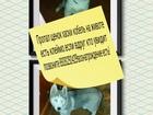 Фотография в   14. 11. 16г. Г. Ростов на Дону в советском в Ростове-на-Дону 0
